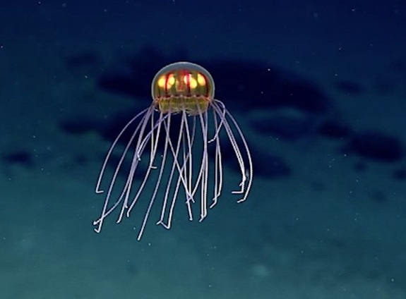 alien-jellyfish-2