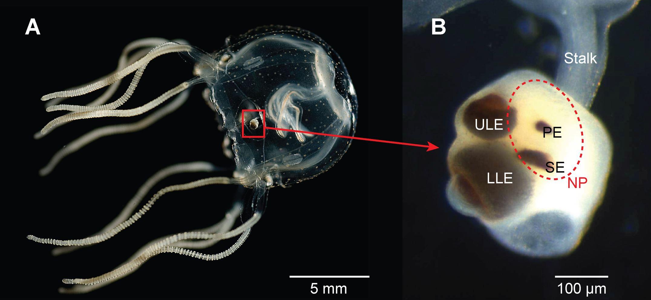 Bielecki et al., (2014)